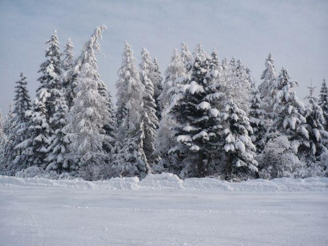 winter snow trees landscape wallpaper