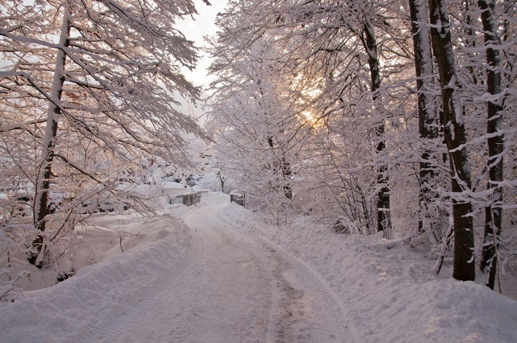 winter trees bridge road landscape wallpaper
