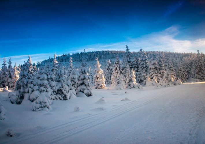 winter trees road landscape wallpaper
