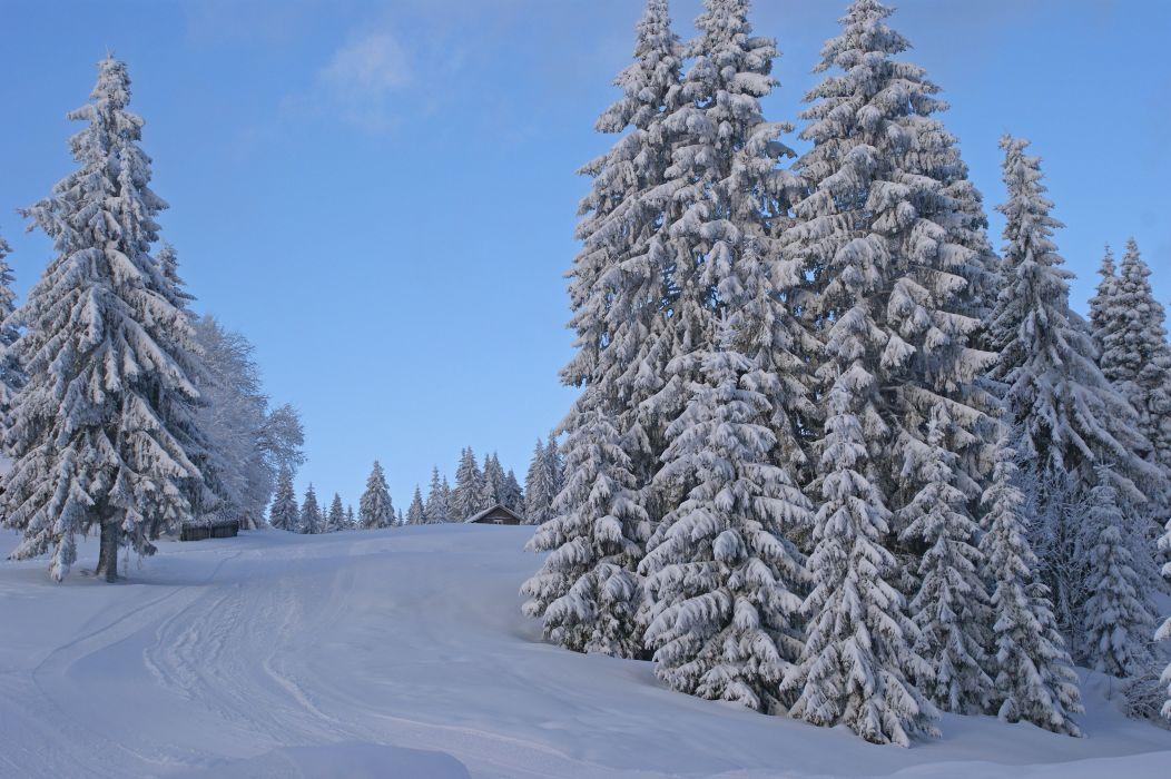 winter trees road landscape  t wallpaper