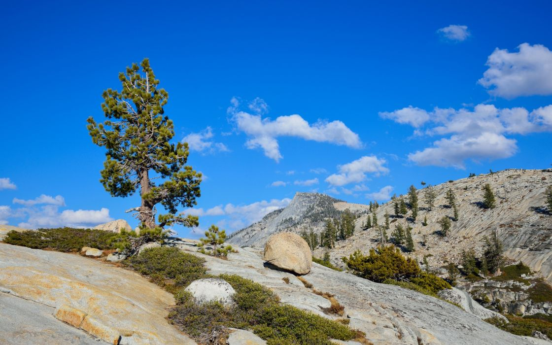 Yosemite National Park California mountains trees landscape wallpaper