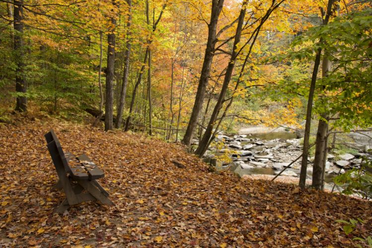 Autumn Rivers Parks Trees Bench Nature wallpaper