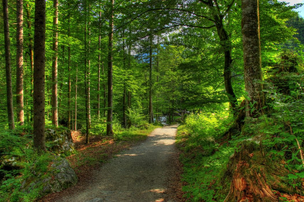 Forests Germany Bavaria Trees Nature wallpaper