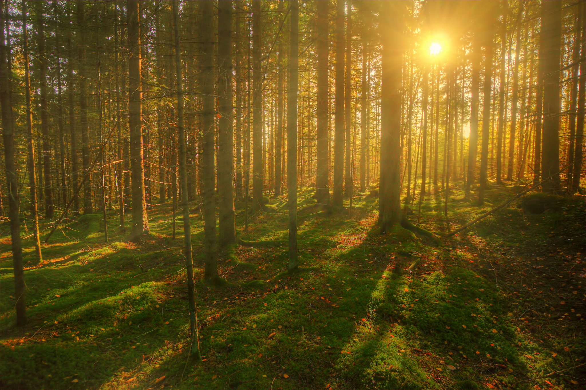 Forests Trees Sun Rays of light wallpaper | 2048x1364 ...