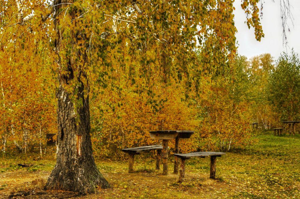 Seasons Autumn Trees Birch Nature wallpaper