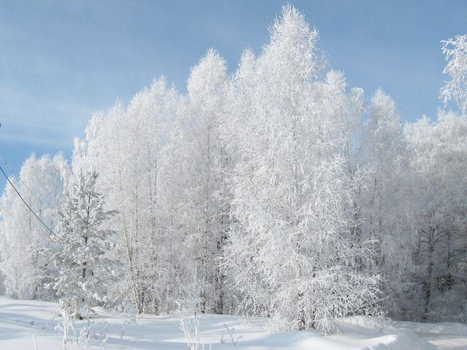 Seasons Winter Snow Nature wallpaper