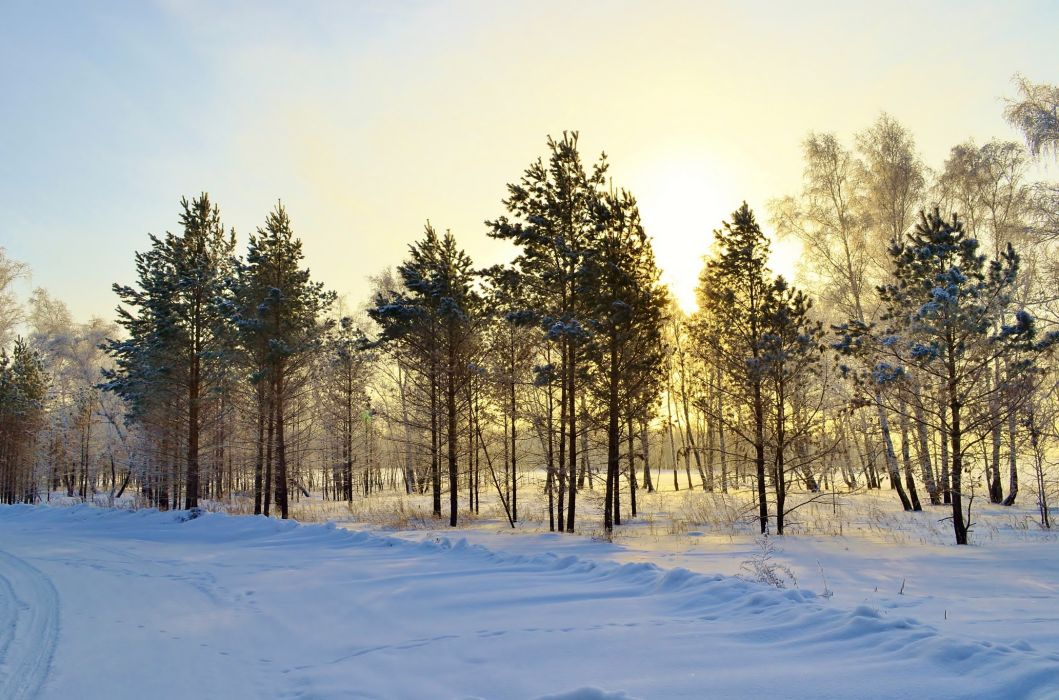 Seasons Winter Trees Snow Nature wallpaper