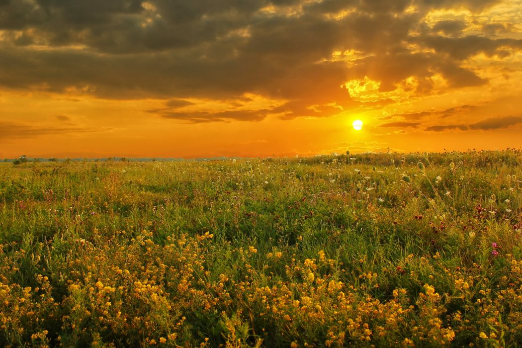 Sunrises and sunsets Fields Nature wallpaper