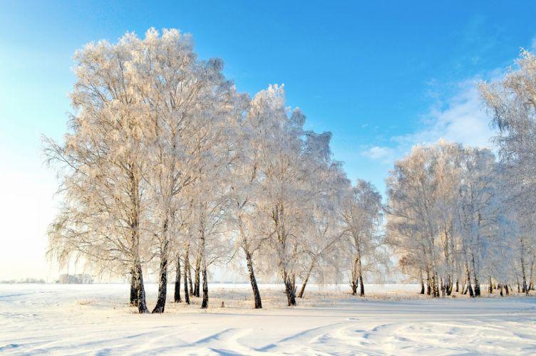 Winter Snow Trees Nature wallpaper