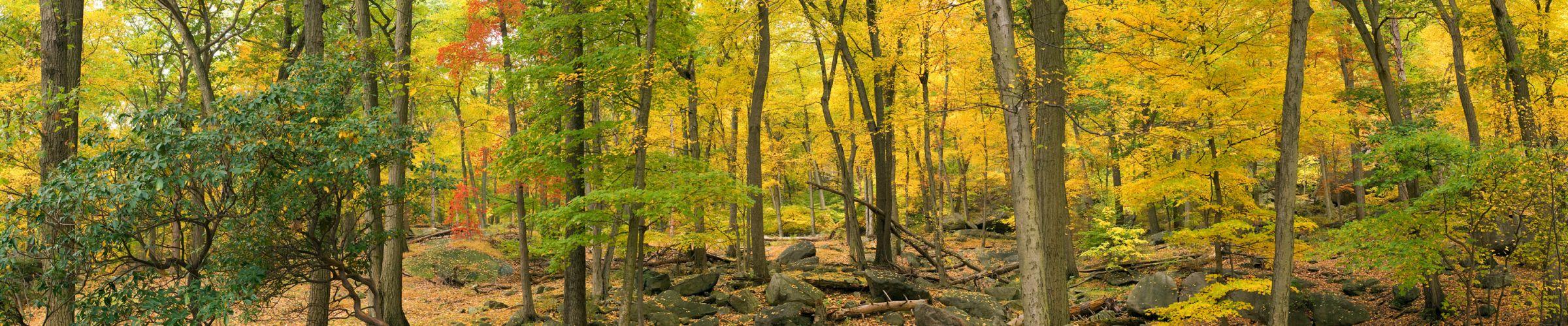 autumn forest g wallpaper