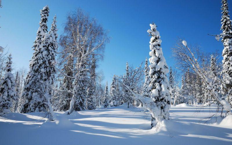 landscapes nature winter snow trees wallpaper