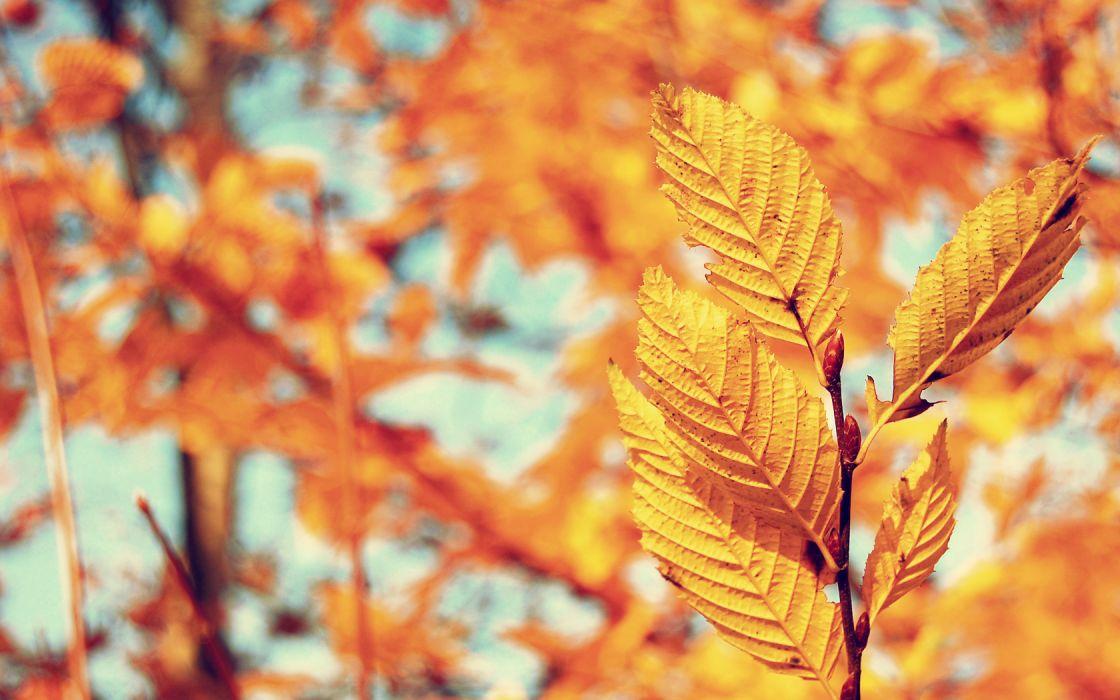 leaf autumn wallpaper