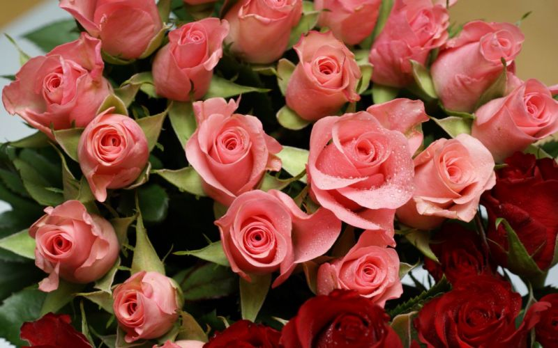 flowers bouquet roses wallpaper