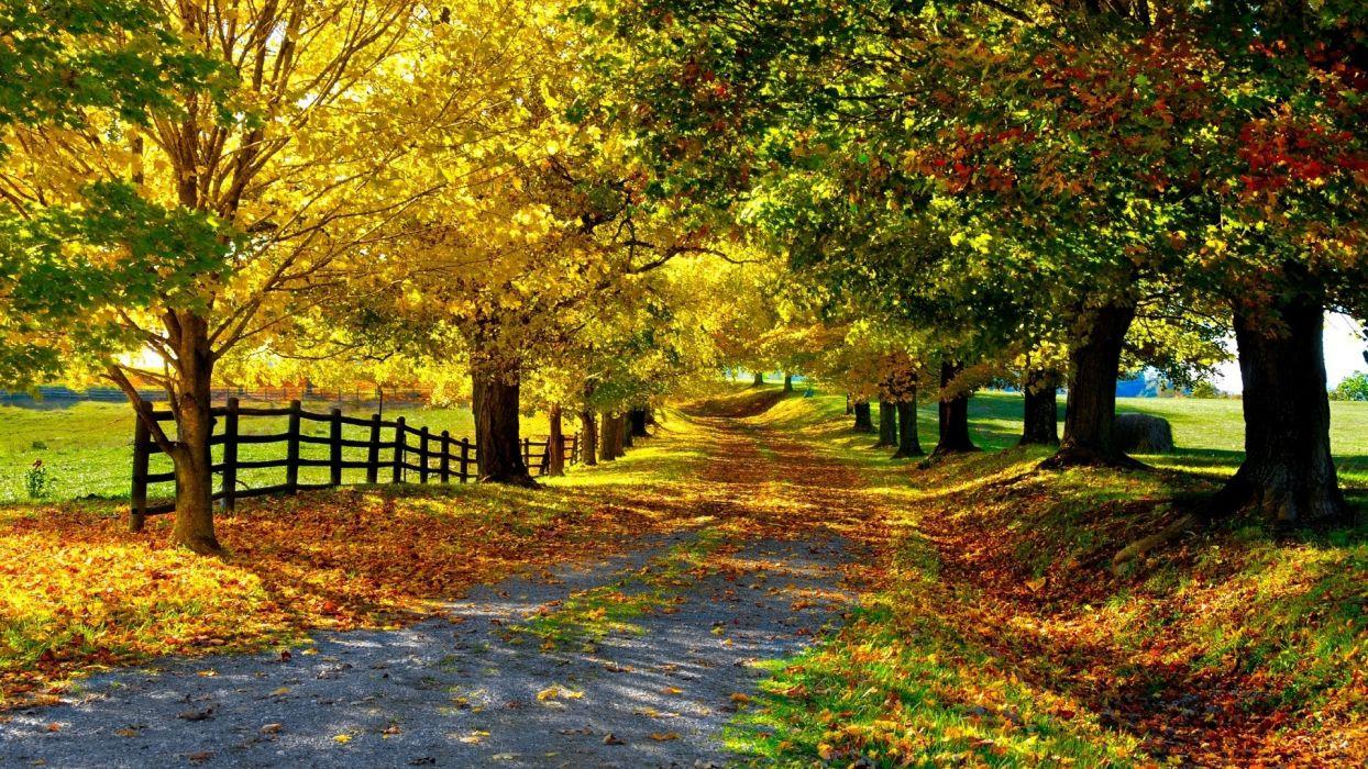 trees autumn roads wallpaper