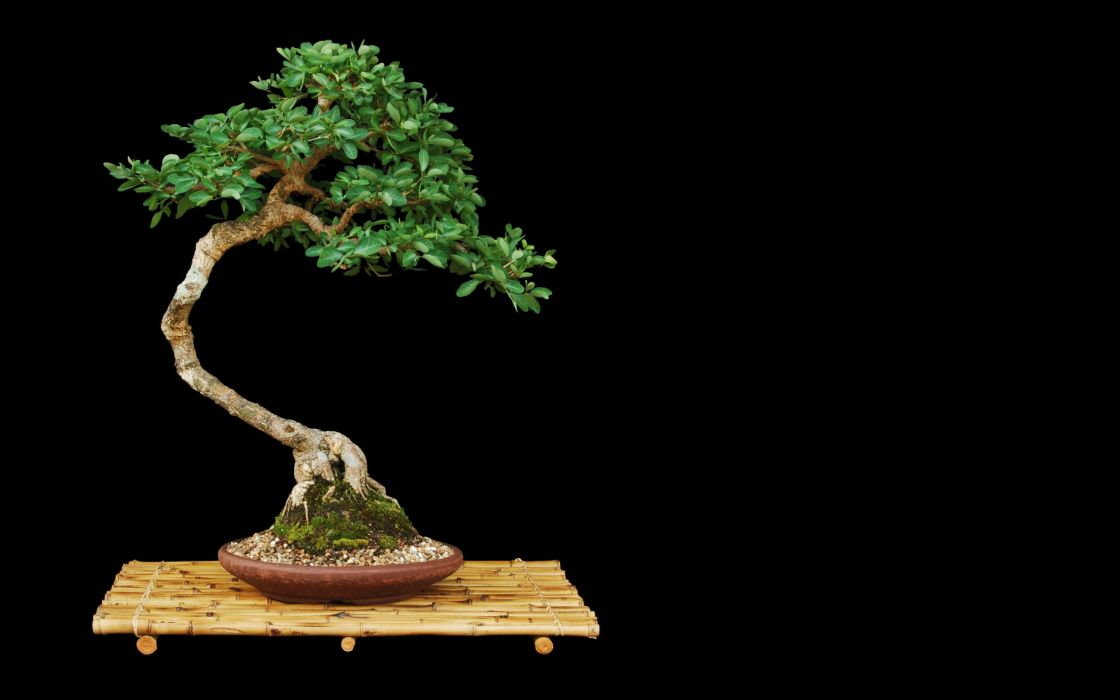 trees bonsai black background wallpaper