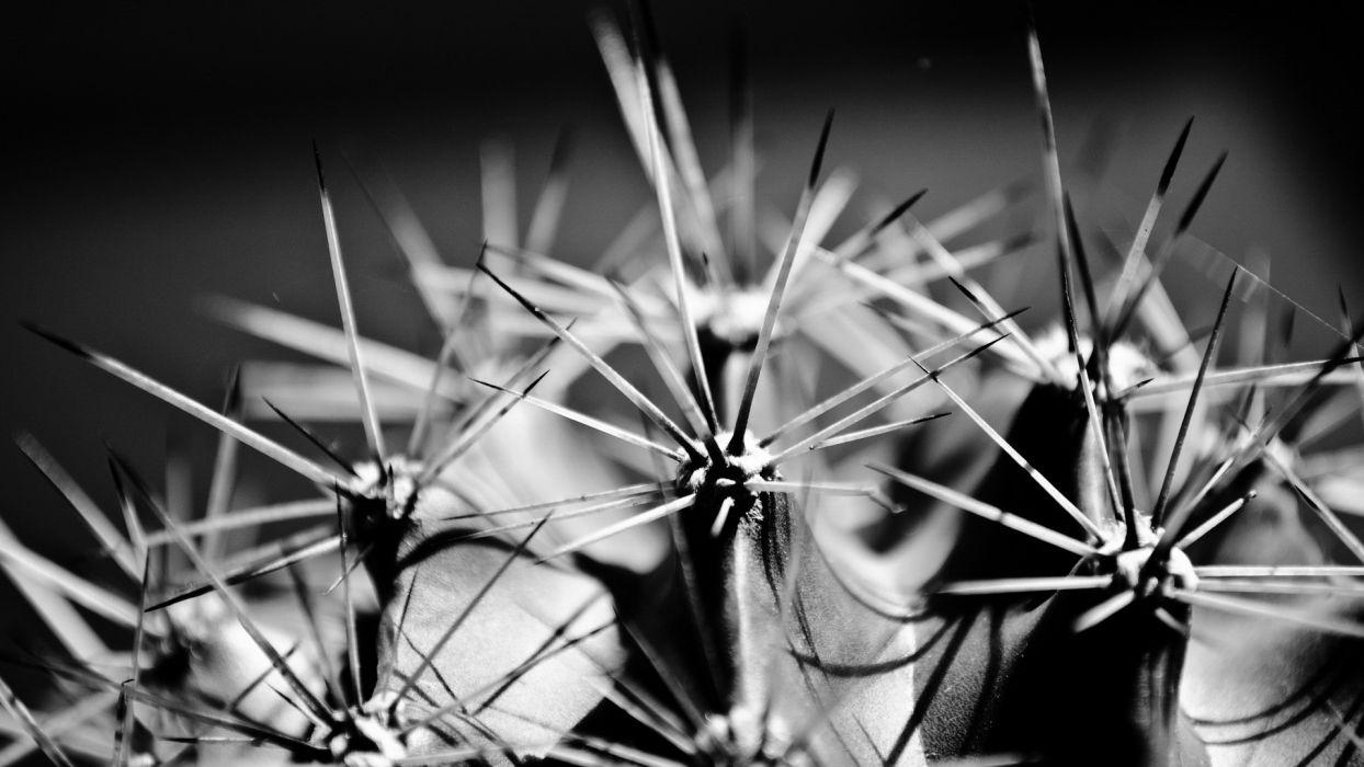 close-up nature plants cactus thorns wallpaper