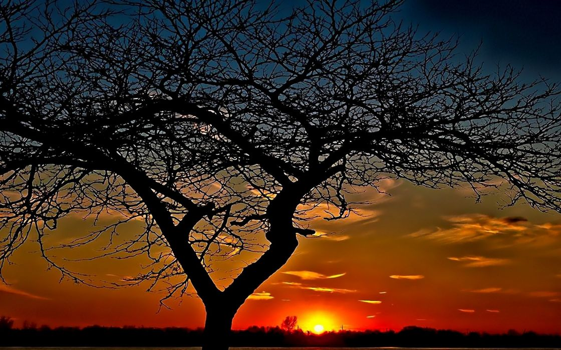 sunset trees widescreen wallpaper