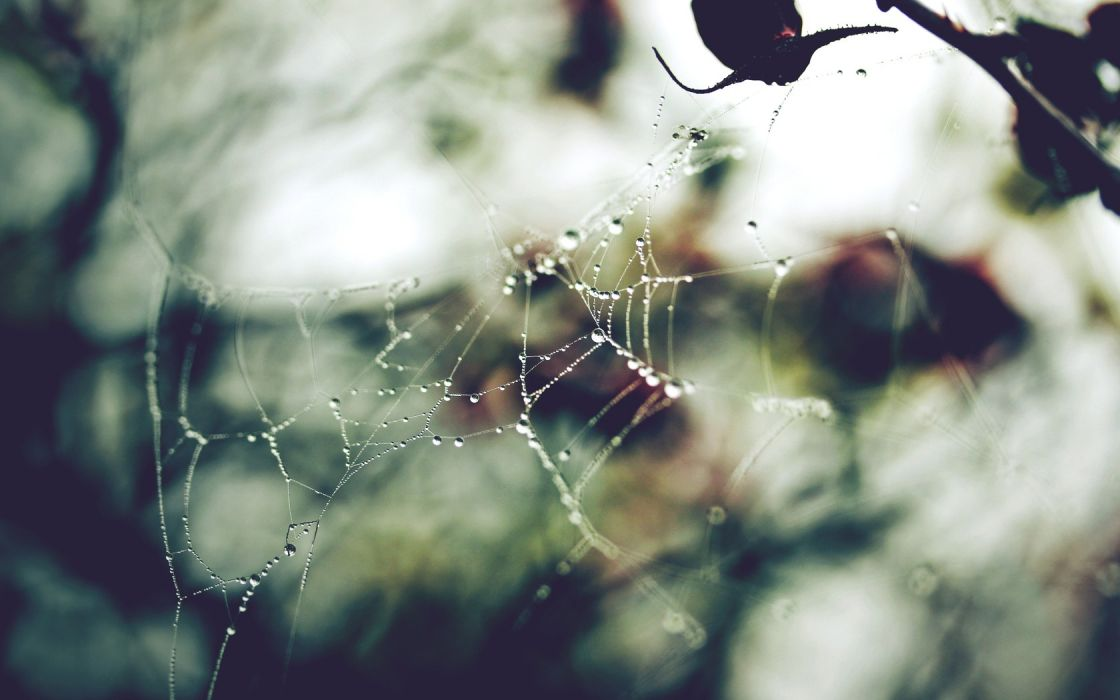 web spiders wallpaper