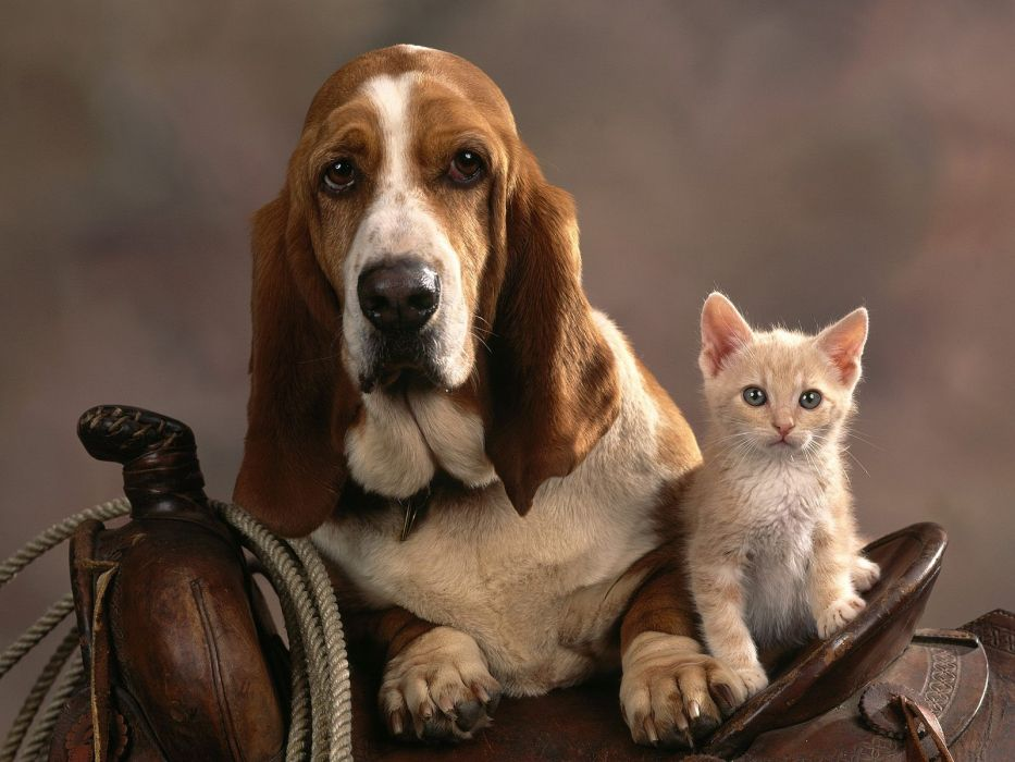 cats animals dogs wallpaper