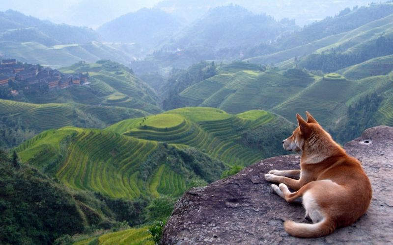 mountains landscapes nature animals dogs scenic wallpaper