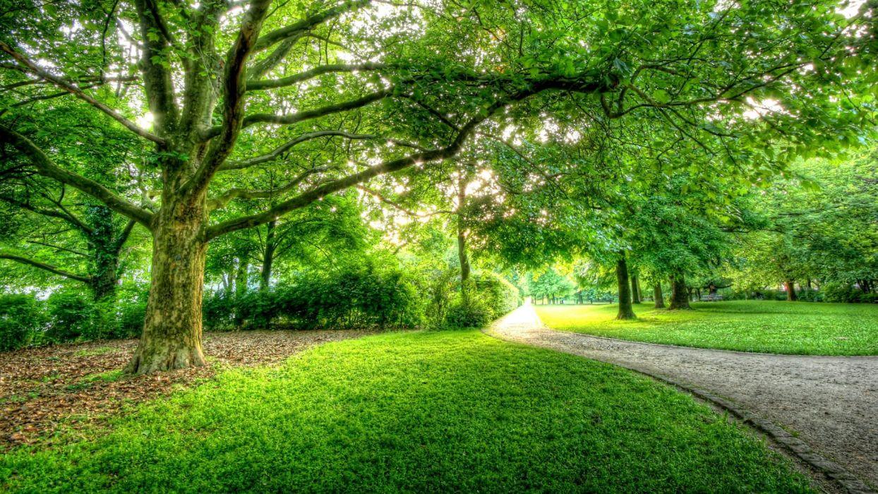 green trees Berlin park wallpaper