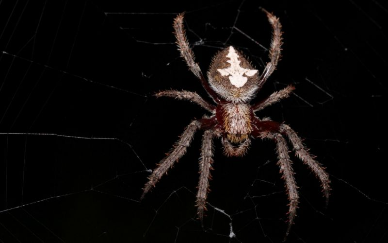 nature insects spiders wallpaper