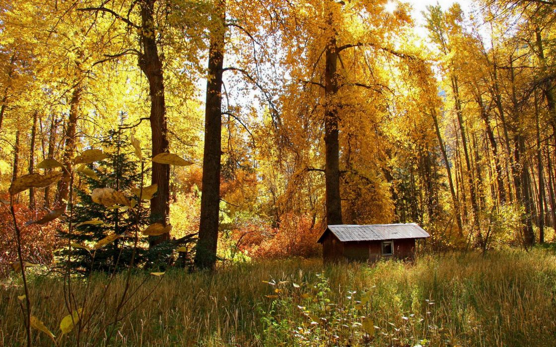nature autumn forests wallpaper