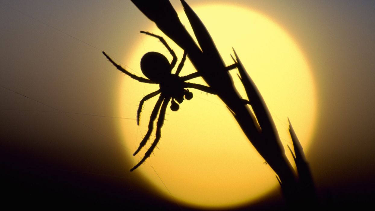 sunset silhouettes Scotland spiders wallpaper