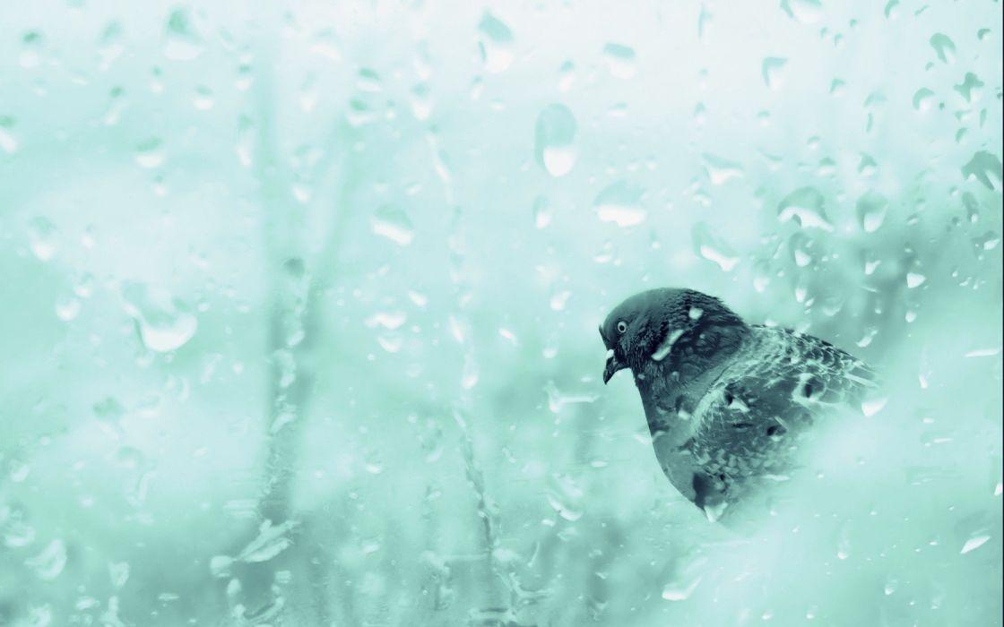 ice winter birds animals cold pigeons wallpaper