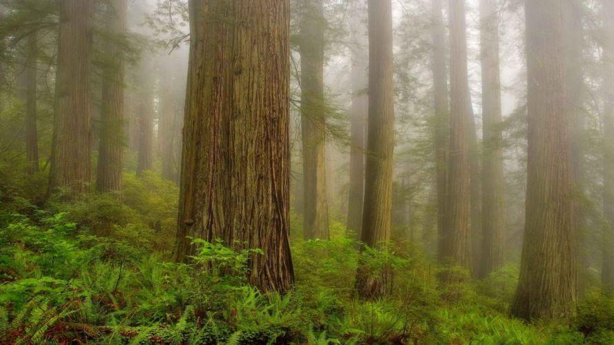 mist California morning National Park wallpaper