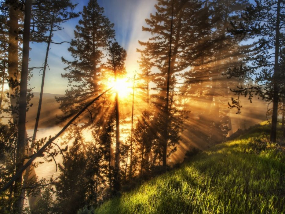landscapes nature trees sunlight wallpaper