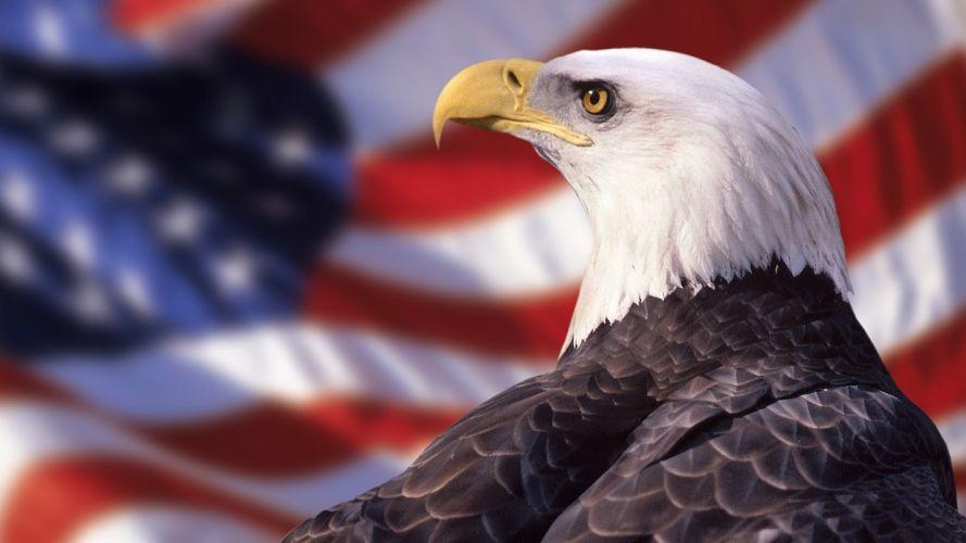 American eagles bald eagles wallpaper