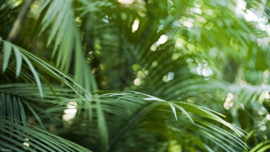 close-up nature bokeh rainforest palm leaves wallpaper