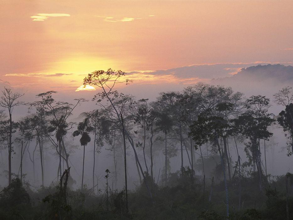 sunset landscapes nature trees skylines forests fog wallpaper
