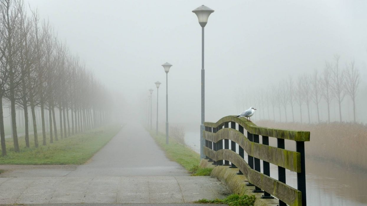 nature birds fog roads sidewalk wallpaper