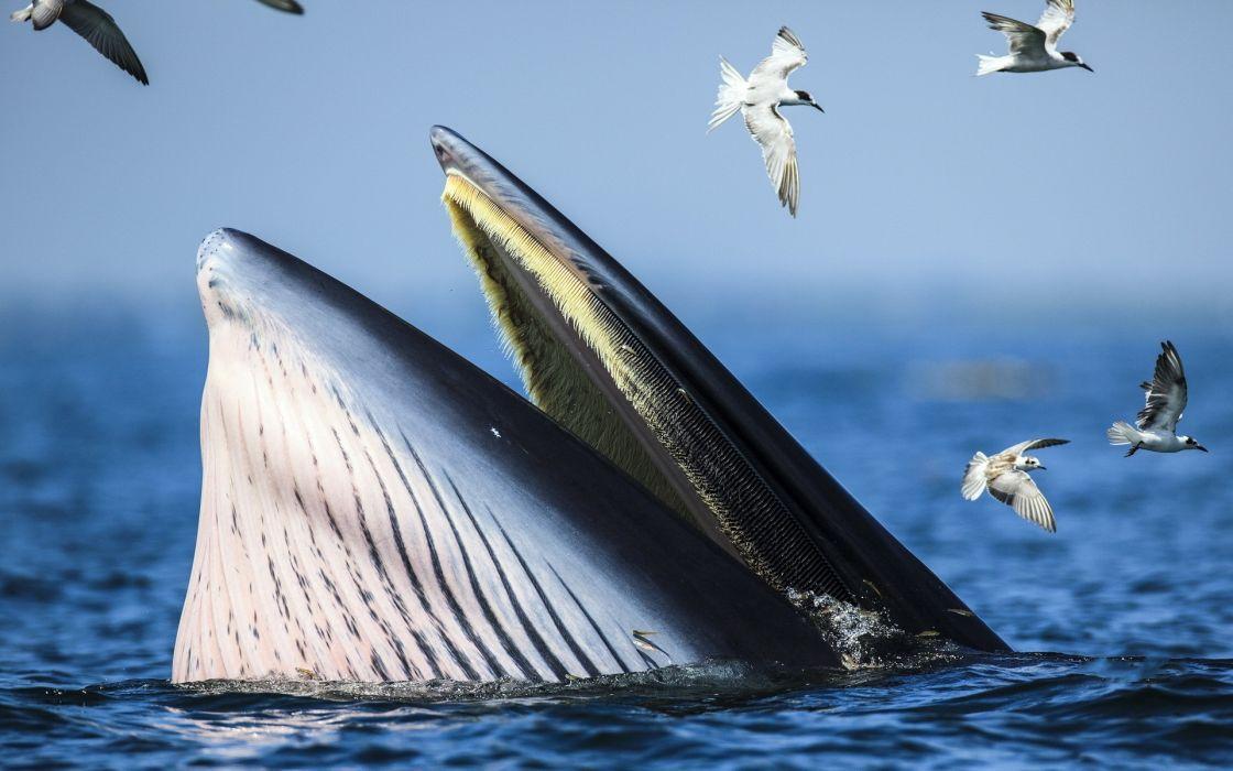 water ocean nature animals whales seagulls wallpaper
