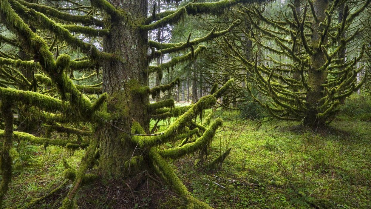 trees silver falls Oregon parks rainforest wallpaper
