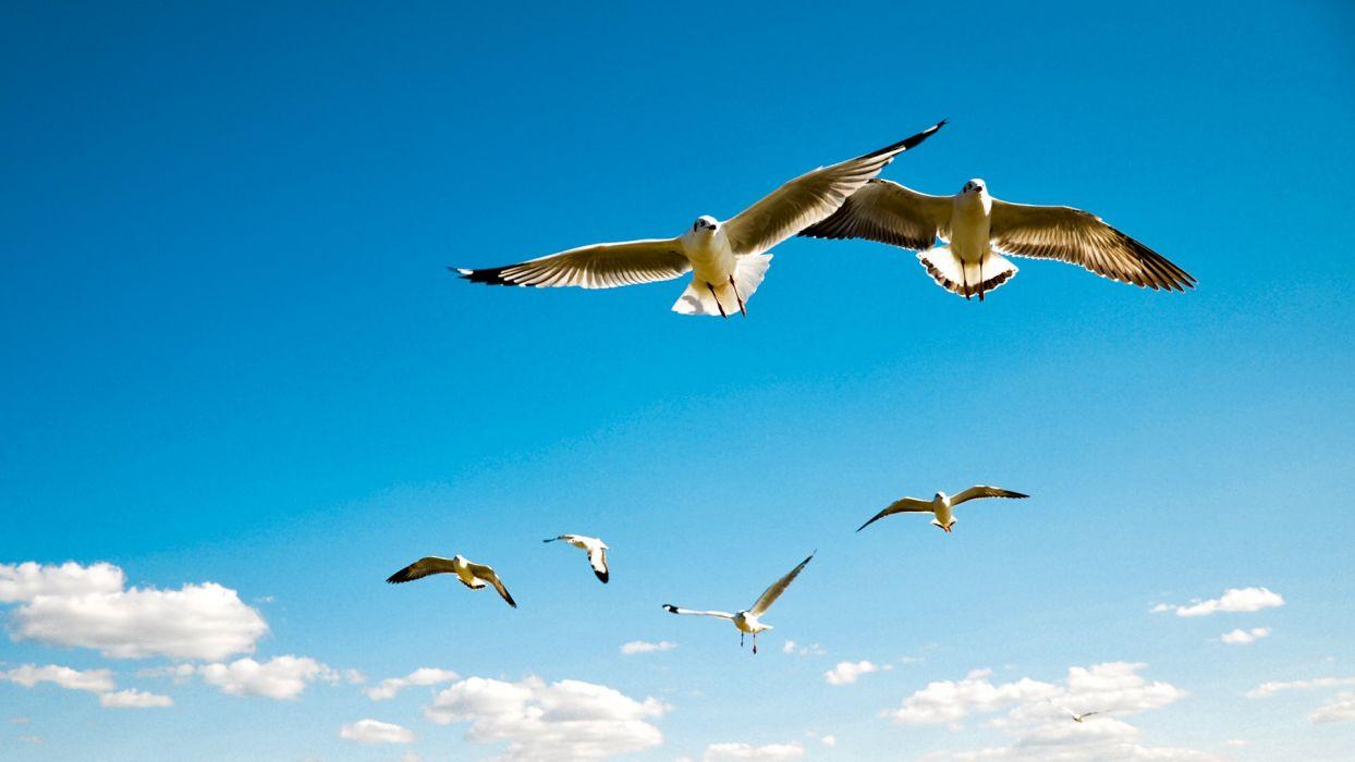 clouds nature birds seagulls wallpaper