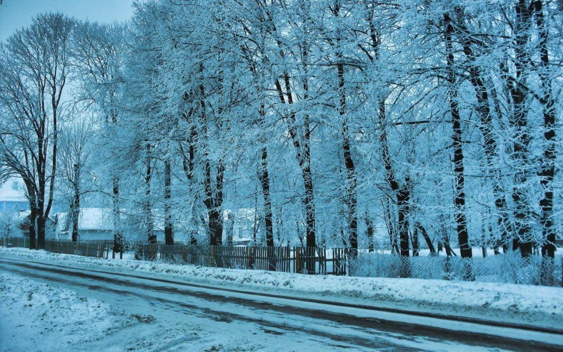 nature winter snow trees wallpaper