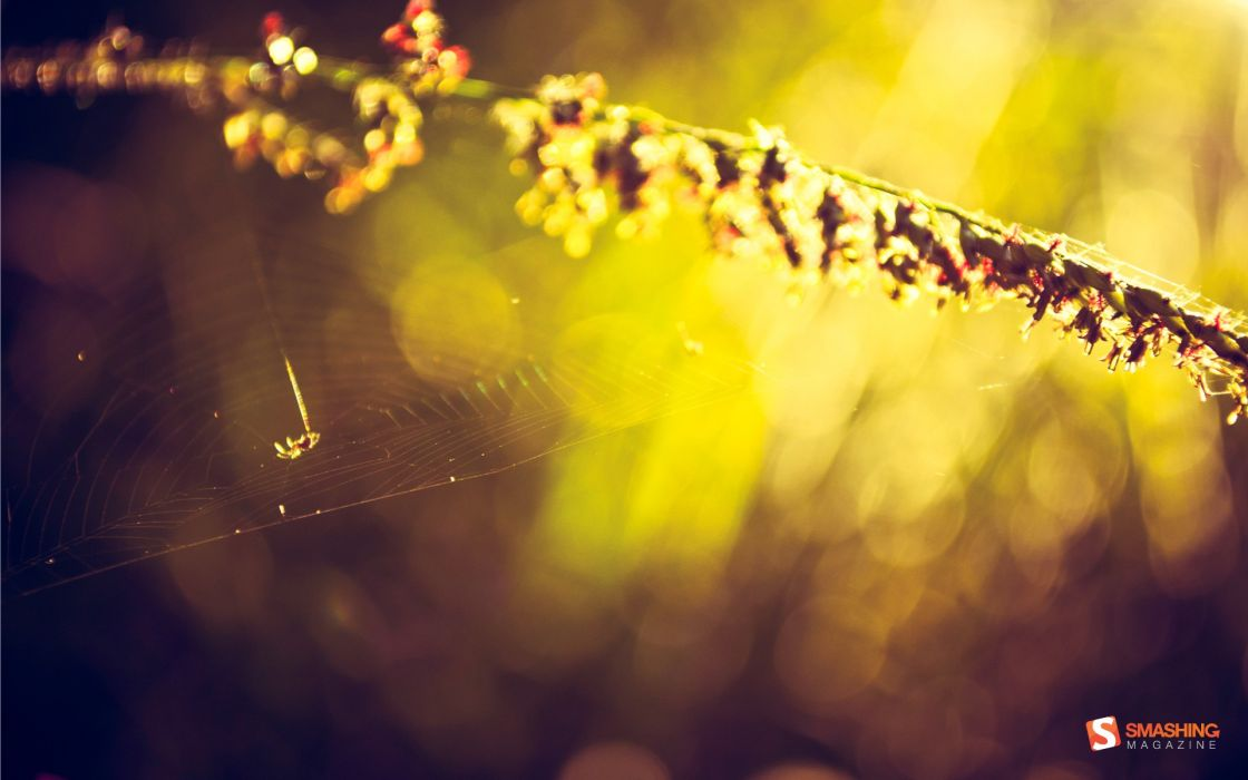 plants bokeh sunlight spider webs Smashing magazine wallpaper