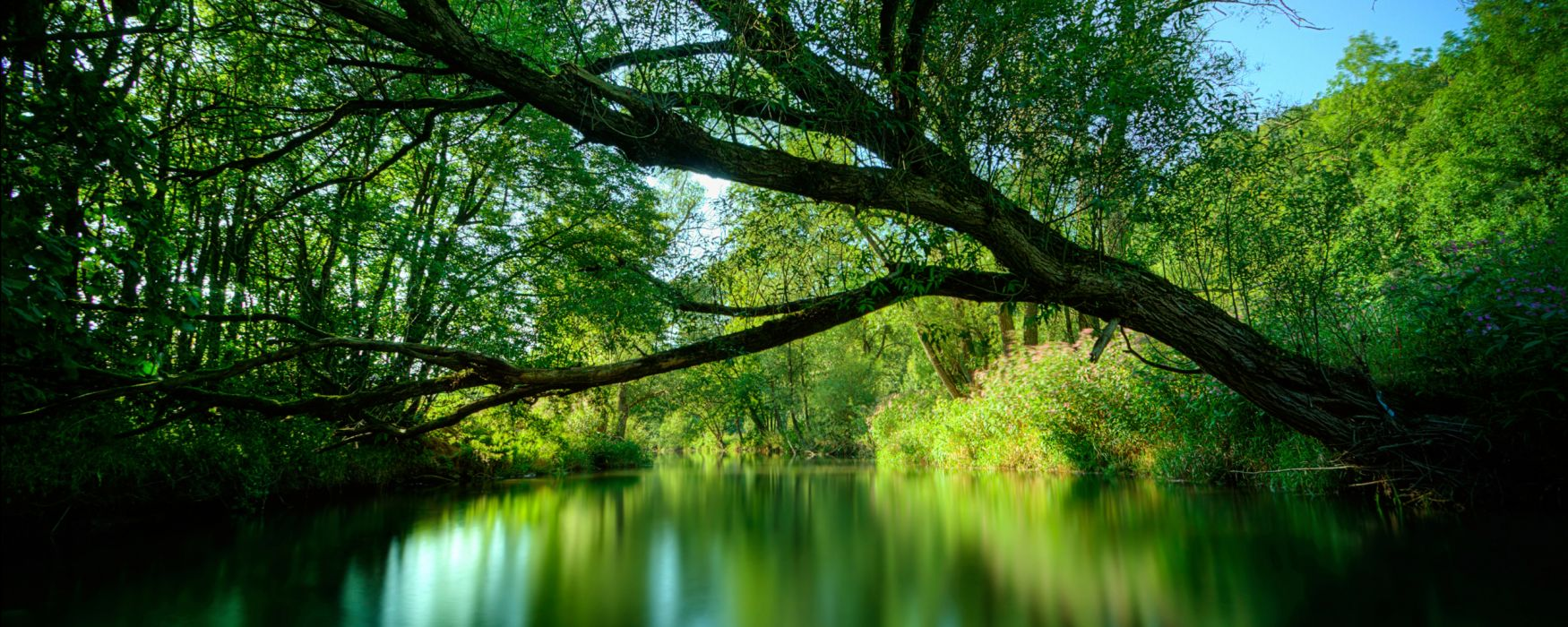 green water nature trees wallpaper