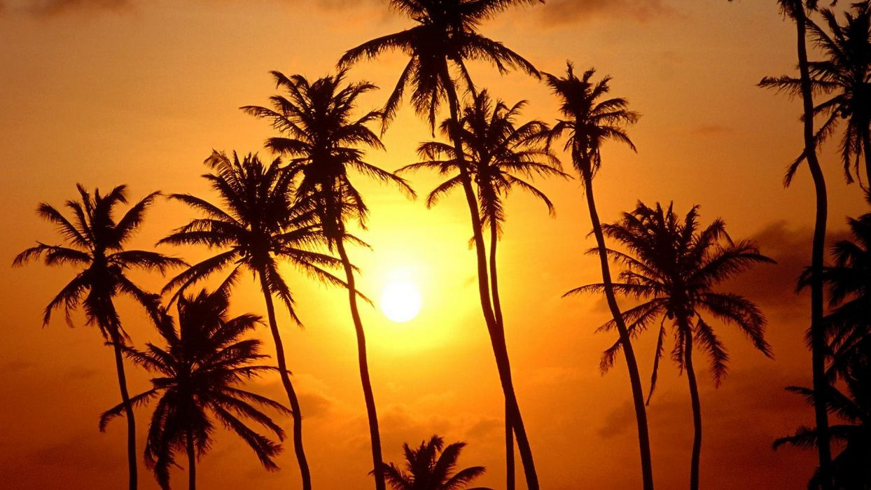 sunset trees paradise Brazil palm trees wallpaper