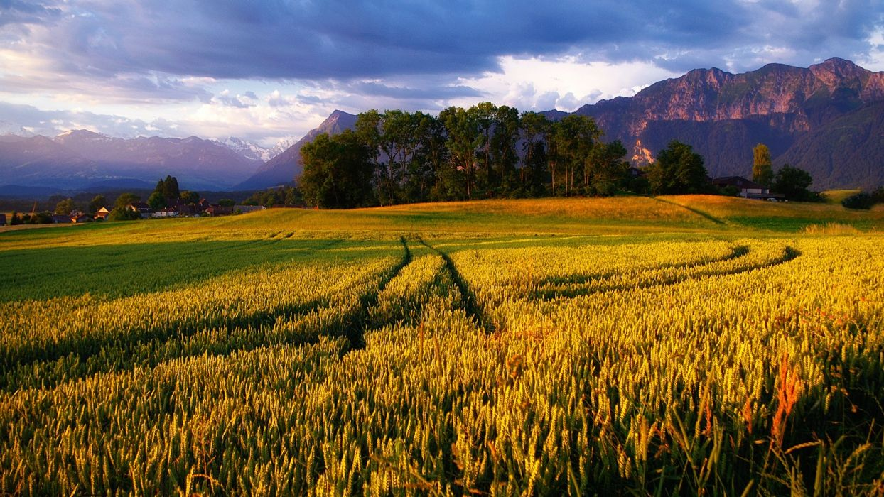 landscapes nature trees fields wheat golden Alps sky wallpaper