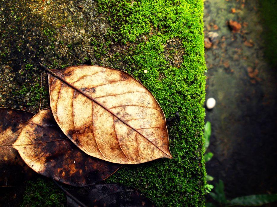 Macro_Leaves_by Milindu Marasinghe wallpaper