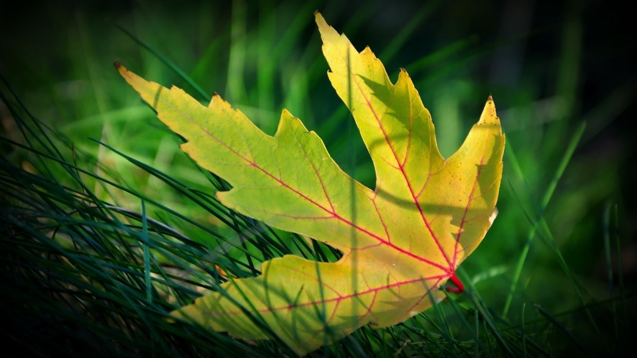 green abstract nature leaves wallpaper