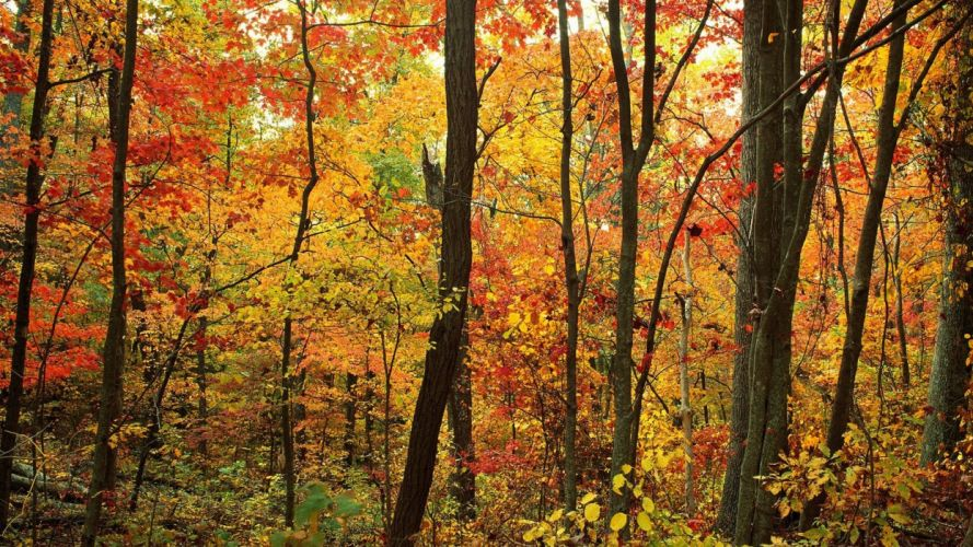 trees forests Appalachian North Carolina wallpaper