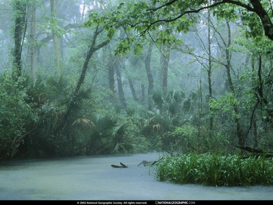 water nature trees National Geographic rainforest wallpaper