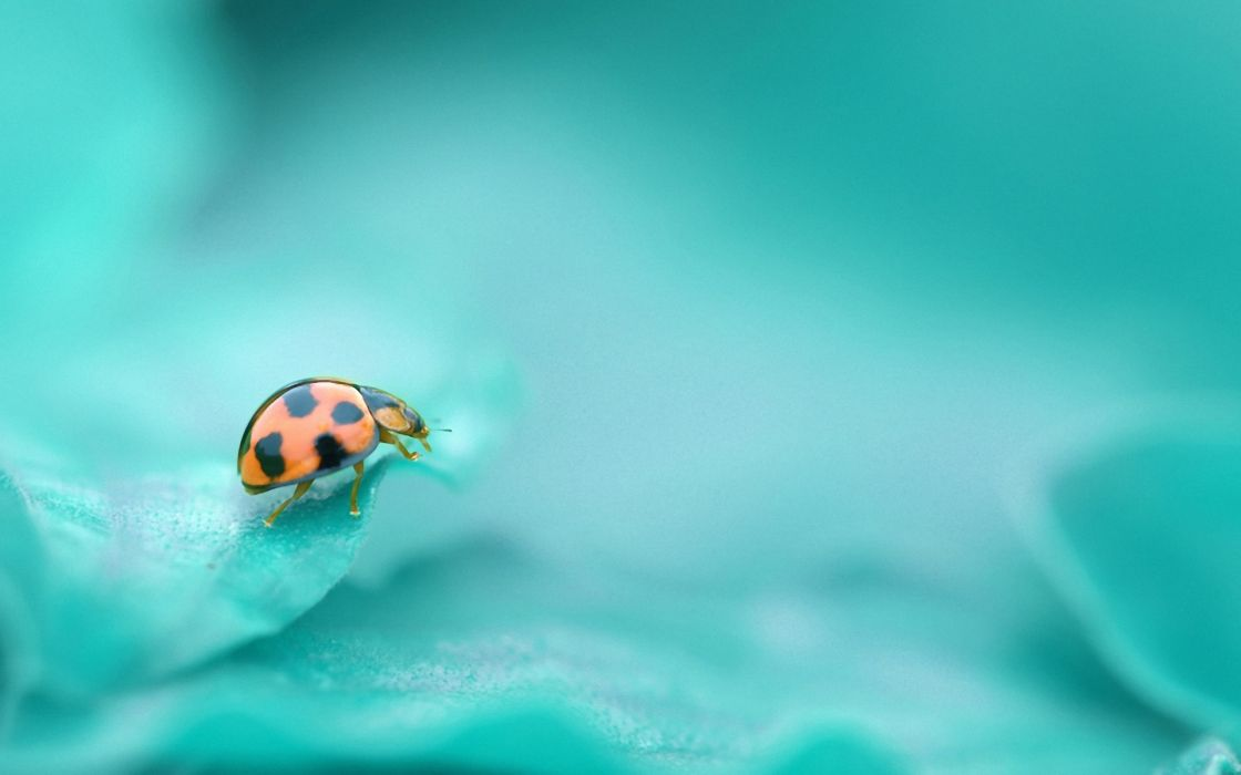 insects wallpaper