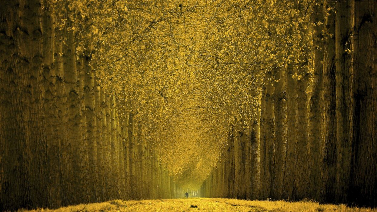 autumn ride wallpaper