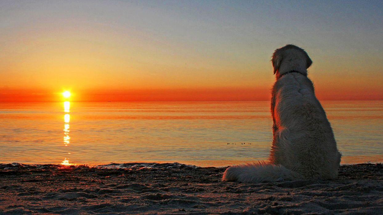 sunset Sun dogs wallpaper